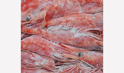 北极甜虾-海之兴