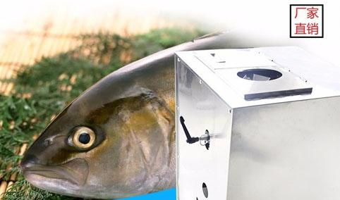 杀鱼去鳞片鱼机