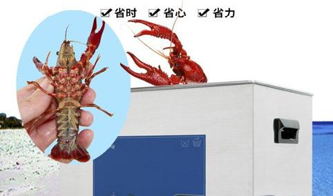 CG-005智能小龙虾清洗机