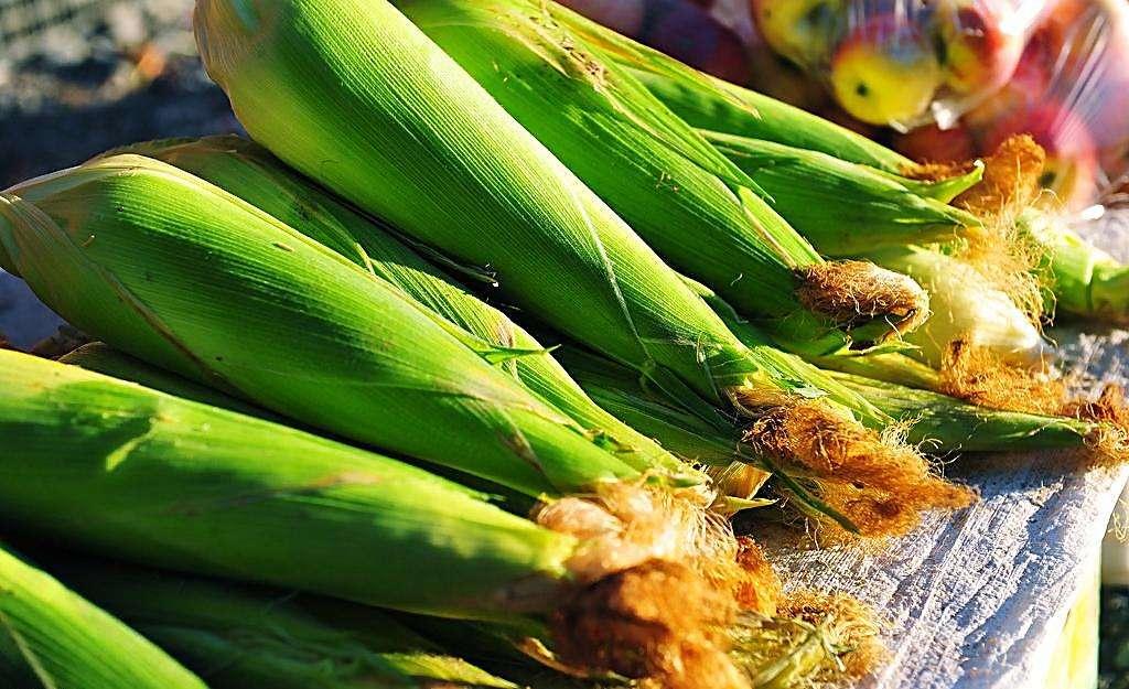 强降水来袭,华北地区玉米价格继续下跌