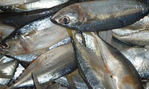 广西北部湾开海,海鲜市场价格稳定