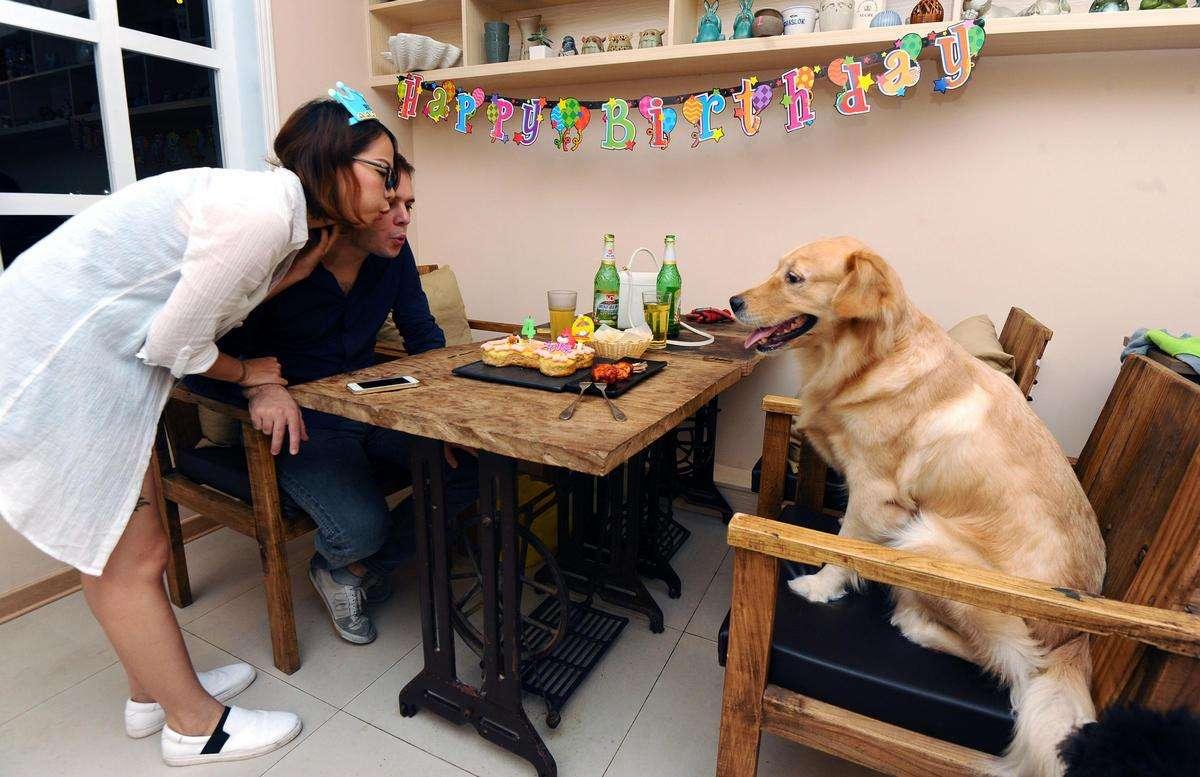 与动物一起就餐?存在卫生风险!