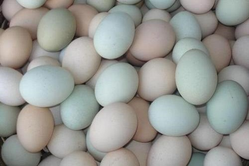 吃鸡蛋的误区有哪些?