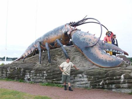 全球最大的美洲龙虾